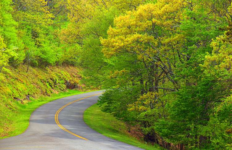 A winding stretch of the Blue Ridge Parkway