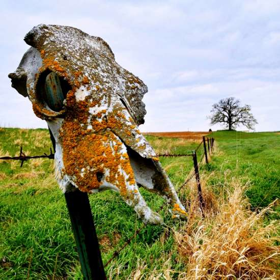 Guideposts: An old cow skull sits perched upon a fencepost, with That Three visible in the distance