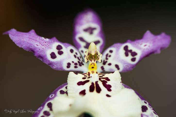 Guideposts: A purple and white orchid captured by photographer Judy Royal Glenn