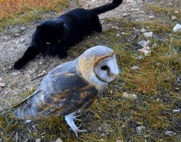 Fum the Cat and Gebra the Barn Owl