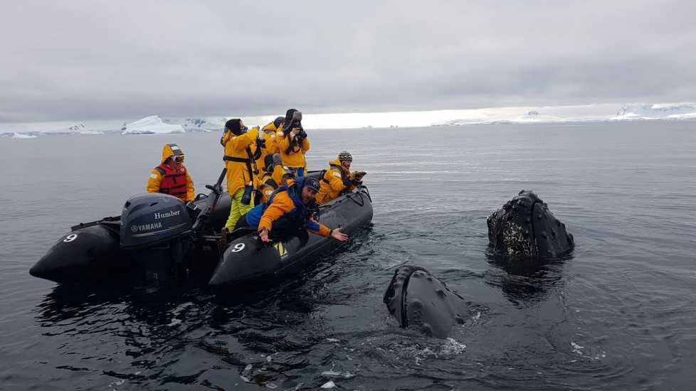 Brett and his team touch the bumpy surface of a whale.