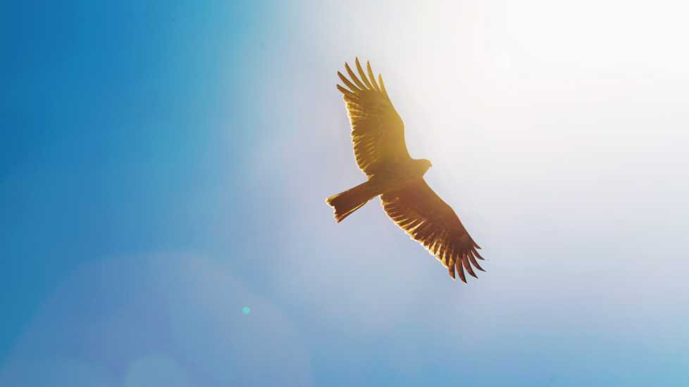 An eagle flying through a blue sky.