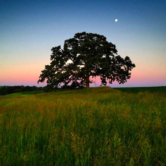 Guideposts: Dawn light creates an enchanted feeling as the moon sets beyond That Tree.