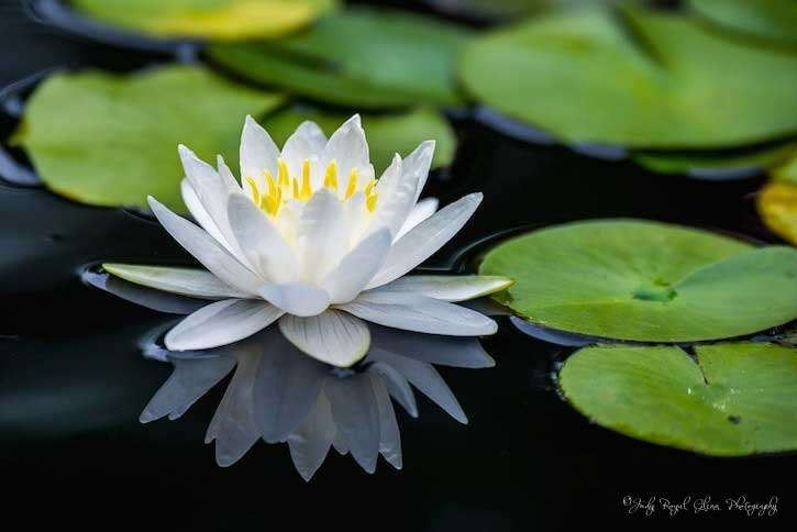 Guideposts: A Water Lily captured by photographer Judy Royal Glenn