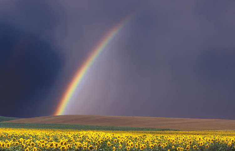 Guideposts: A rainbow appears above a field filled with bright yellow flowers