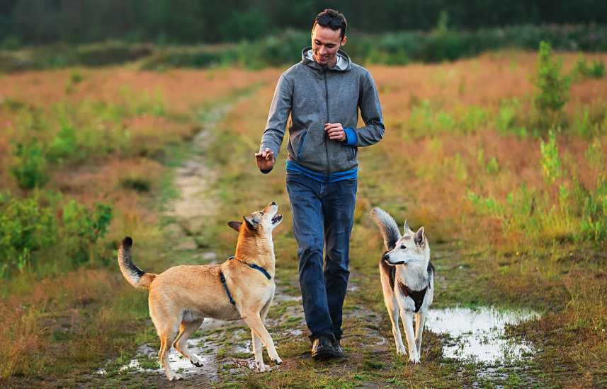 Man walking his dogs