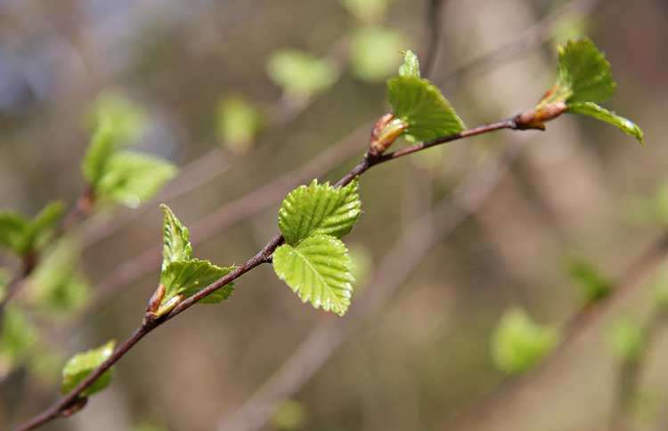 Guideposts: Tiny green leaves on the branch of a tree