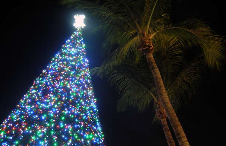 Guideposts: Delray Beach's tree, covered with more than 15,000 LED lights, is positioned in the city's Old School Square.