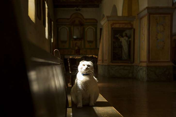 Guideposts: Sula perches on a pew at the Old Mission San Juan Bautista