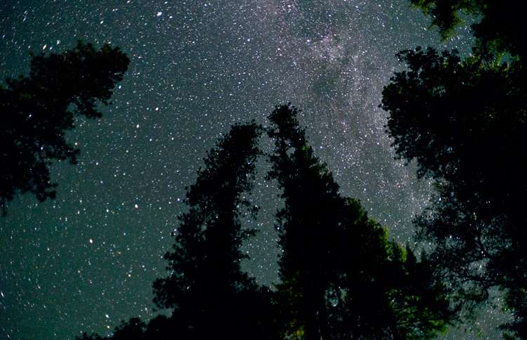 An inspiring view up through the trees at a star-filled night sky