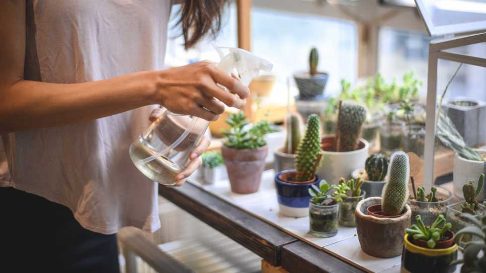 A woman watering succulents and other plants.