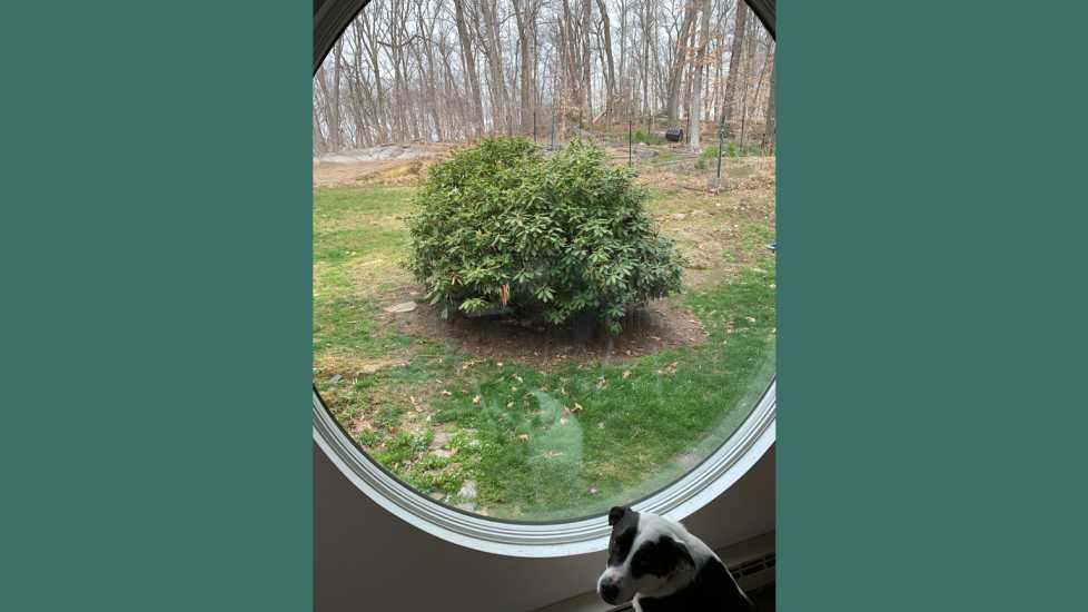 The dog Lincoln often stares out that window waiting for a bird to fly by or a chipmunk to chase.