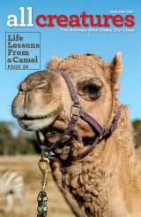 In her cover story for the March-April 2020 issue of All Creatures magazine, Joanna McMurry shares shares the lessons she learned from caring for the two camels her husband gave her.