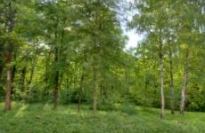 A scenic shot of green trees in the summer