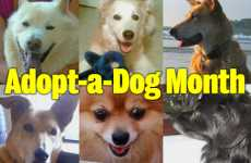 Inspiring stories about dog adoption