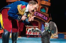 Luciano's Circus Pups