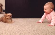 Baby and puppy play together