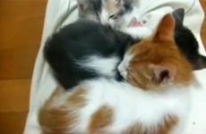 A stack of cute kittens