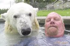 Grizzly man Mark Dumas swims with a polar bear