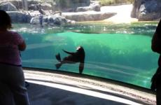 Sea lion at the National Zoo in Washington DC