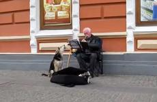 A musical mutt and his human pal