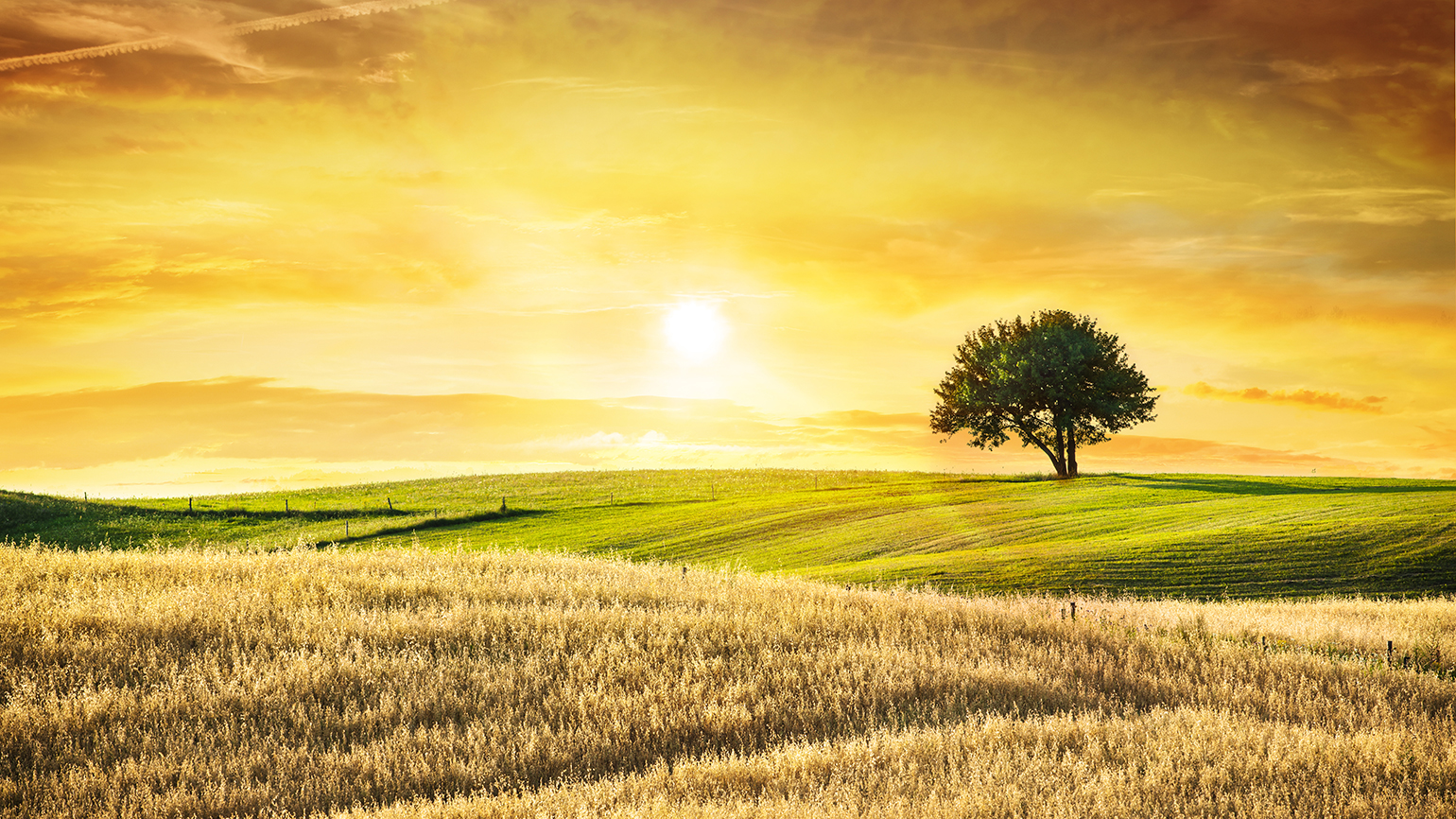 The sun rises over a golden field of wheat