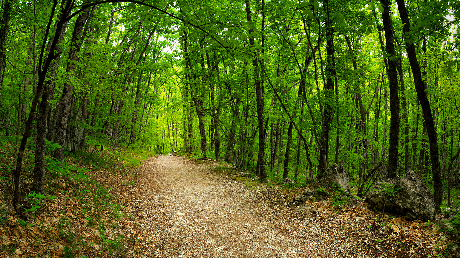 An empty, wooded path