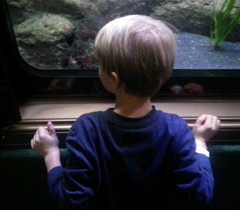 Zay gazes up at fish in a large aquarium tank.